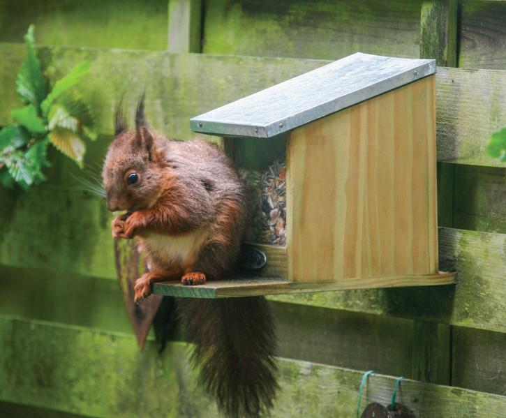 Eichhörnchen Futterhaus Versandkostenfrei !